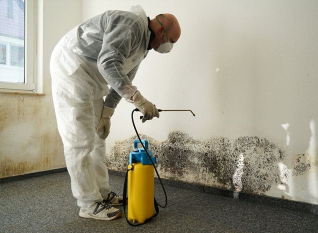 mold remediation 905 brampton ontario