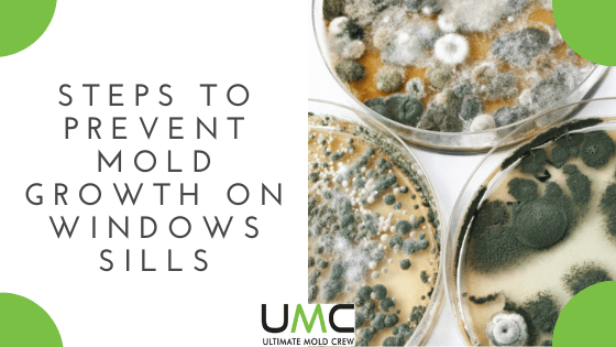 Prevent-Mold-Growth-On-Windows-Sills