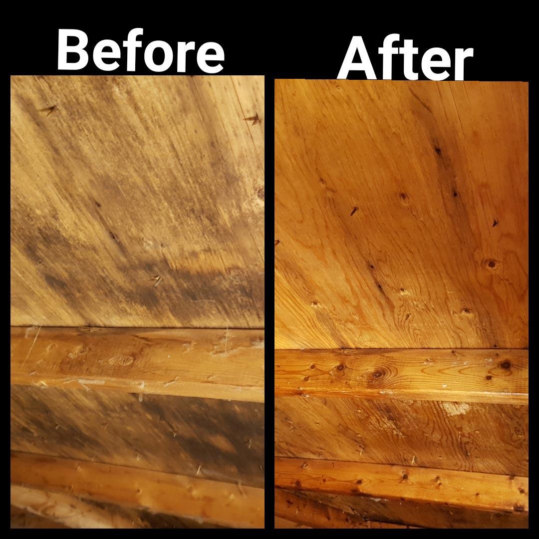 attic mold removal toronto