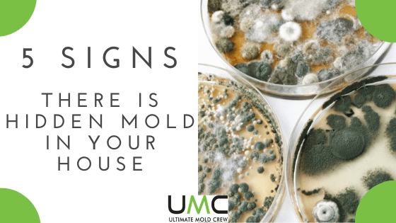 How To Find Mold Hidden In Your Home