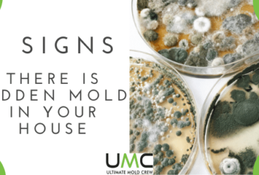 How-To-Find-Mold-Hidden-In-Your-Home