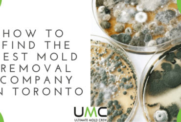 How-To-Find-The-Best-Mold-Removal-Company