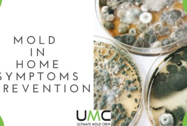 Mold-IN-HOME-PREVENTION-TIPS