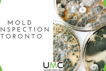 Mold-Inspection-Testing-Guide-Toronto