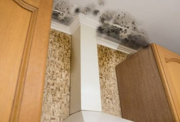 TOP RATED Mold Removal & Mold Remediation Toronto