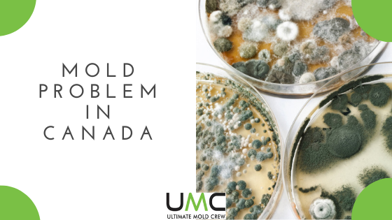 Mold problem canada